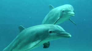Niezwyk³y Ocean  / Amazing Ocean (2012) PL.1080p.BD9-ELiTE / Lektor PL