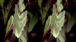 The Secret Life of the Rainforest (2011) 3D.BluRay.HSBS.1080p.x264-CHD3D