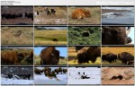 Gro�ne bestie / Thunder Beasts (2005)  PL.DVBRip.XviD / Lektor PL