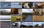 Dzika Alaska / Wild Alaska (2011) PL.DVBRip.XviD / Lektor PL
